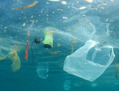 Marine Rubbish – una sfida da condividere